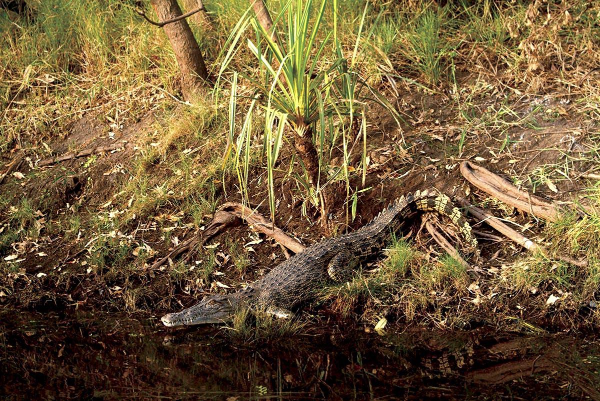 croc_riverbank.jpg