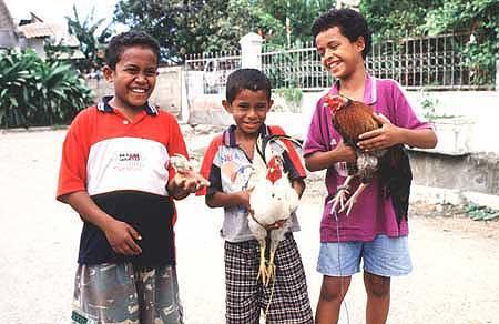 learner_chicken.jpg